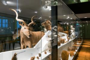 Loodusmuuseum_külastusmäng